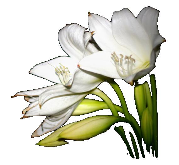 flowers-funeral-v1